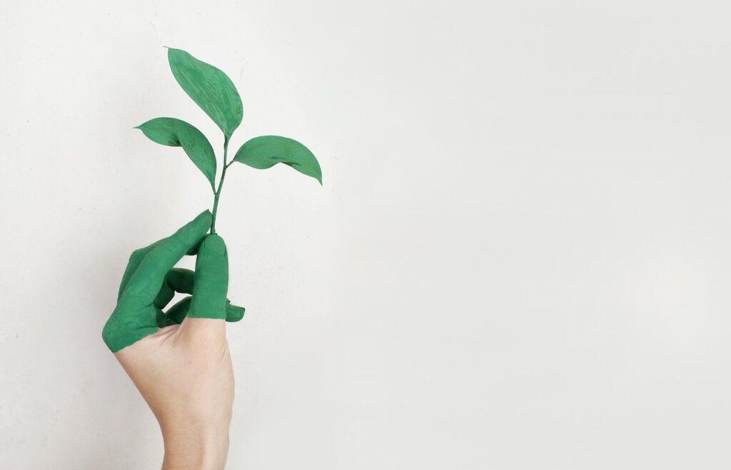 Gode råd til dig der gerne vil leve en mere bæredygtig livsstil